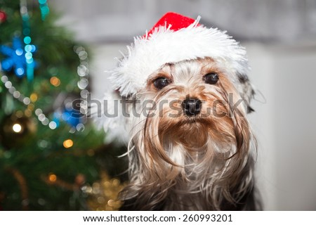 Little dog with santa hat - stock photo