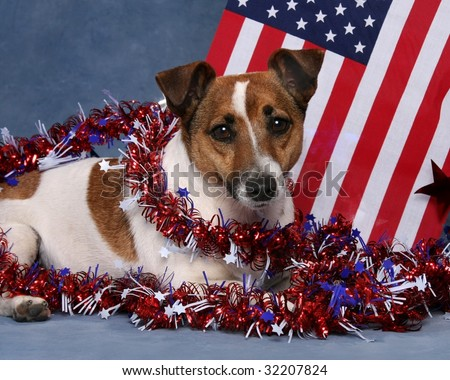 Little dog with USA flag and Garland patriotic 4th 0f July theme - stock photo