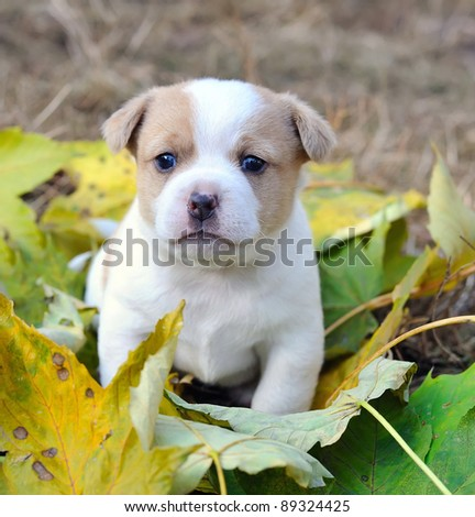 Little doggie are in an autumn letter - stock photo