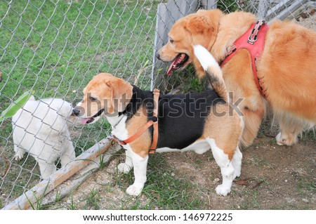 Little dogs in the park  - stock photo