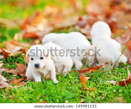 Little dog Stock Photos, Images, & Pictures | Shutterstock