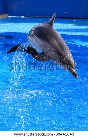 little dolphin jumping out of water