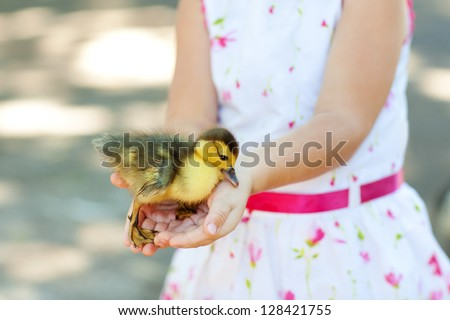little duck in hands of the child - stock photo