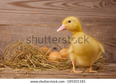 little duckling on a wooden background