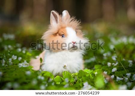 Little dwarf rabbit sitting in flowers - stock photo