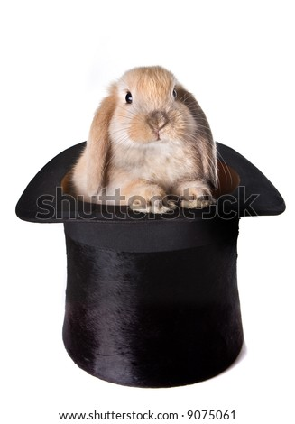 Little easter bunny as a surprise in a top hat - stock photo