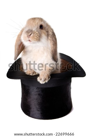 Little easter lop rabbit in a magician's hat