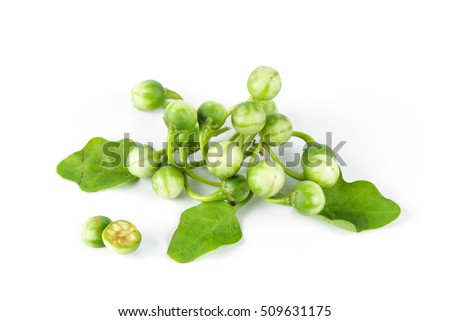 little eggplant or turkey berry isolated on white background