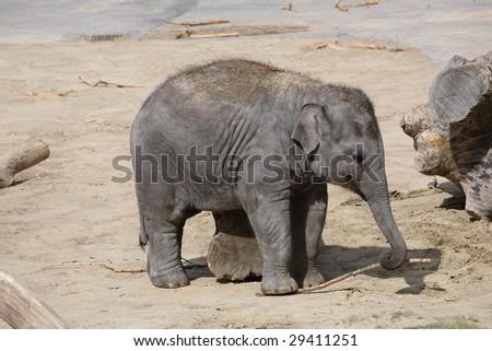 Little elephant - stock photo