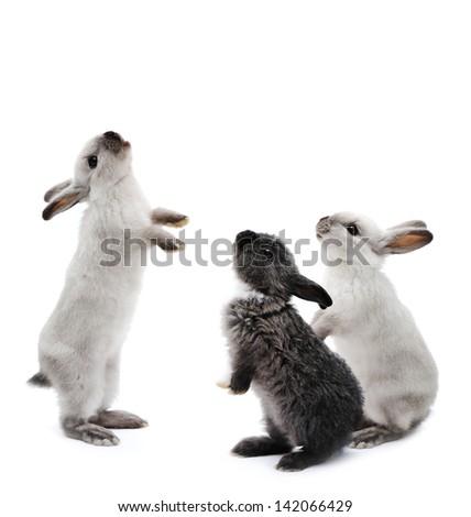 Little family rabbits on white - stock photo