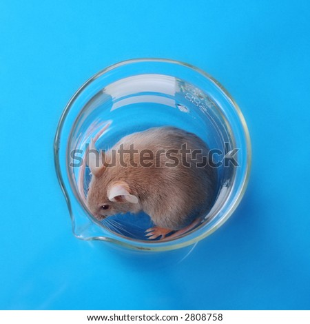 little fancy mouse in a beaker on blue paper background - stock photo