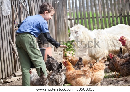 Little farm boy feeding the chickens and the goat in the countryside - stock photo