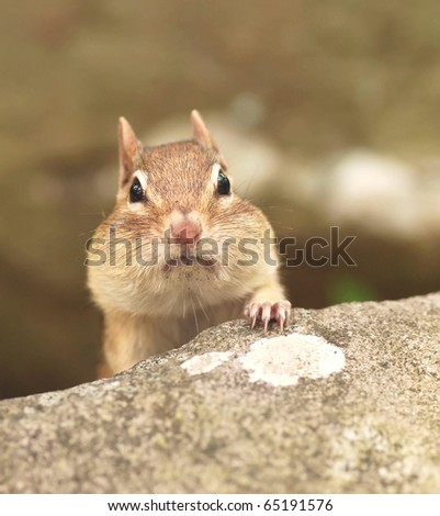 little female with full cheeks pops her head over a rock - stock photo