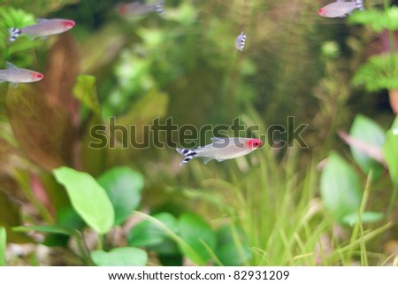 Little fishes in fishtank with plants - stock photo
