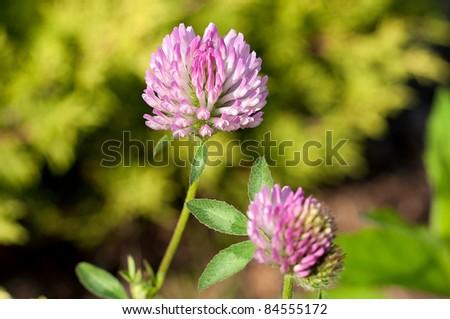 little flower - stock photo