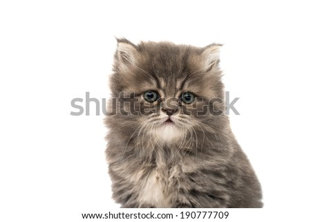 little fluffy kitten on a white background