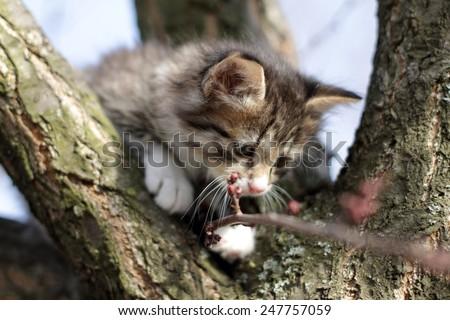 little fluffy kitten on the tree in nature - stock photo
