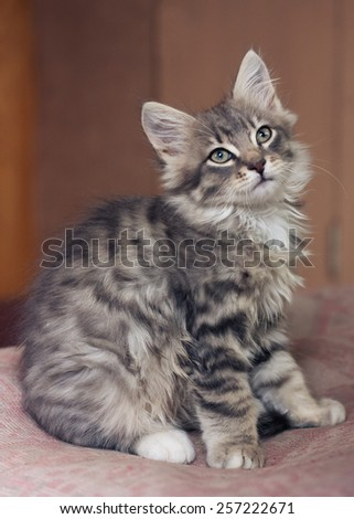 Little fluffy kitten. soft focus - stock photo