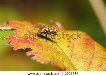 little fly on a leaf in autumn - stock photo