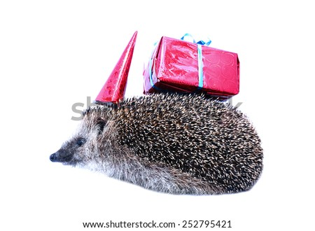 Little forest hedgehog in a festive hat and with a gift isolated on white background - stock photo