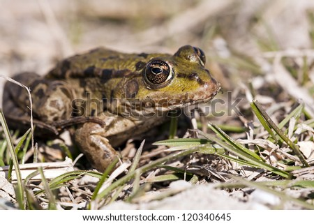 Little frog sitting in the grass - stock photo