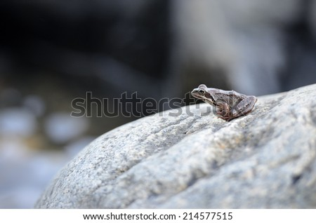 little frog sitting on a large rock - stock photo