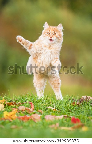 Little funny cat playing outdoors in autumn - stock photo