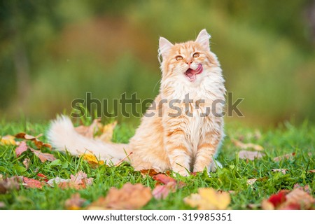 Little funny cat sitting outdoors in autumn - stock photo