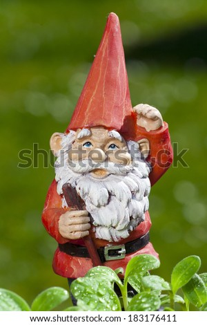 Little funny garden gnome in the garden behind small seedlings of herbs - stock photo