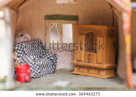 Little funny hamster behind seat in a small imagine home. - stock photo