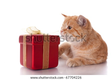 Little funny kitten and gift box on a white background. - stock photo