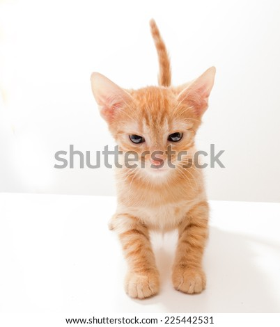 Little funny kitten in studio on light background - stock photo