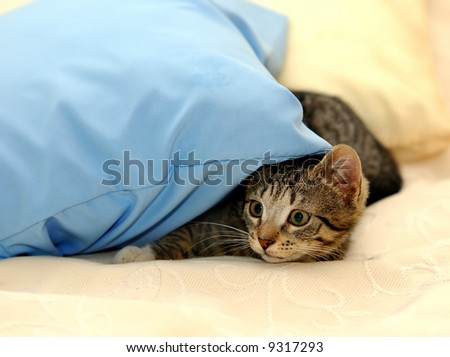 Little funny kitten. playing on bed - stock photo
