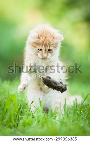 Little funny kitten playing with a caught mouse - stock photo