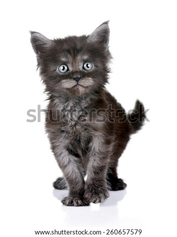 Little funny kitten standing on a white background