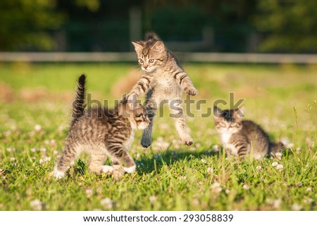 Little funny kittens playing outdoors in summer - stock photo