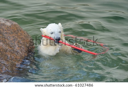 Little funny polar bear playing in water