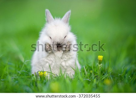 Little funny rabbit washing up in summer - stock photo