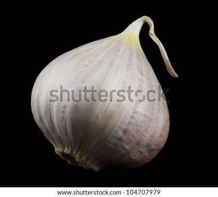 Little Garlic isolated on black - stock photo