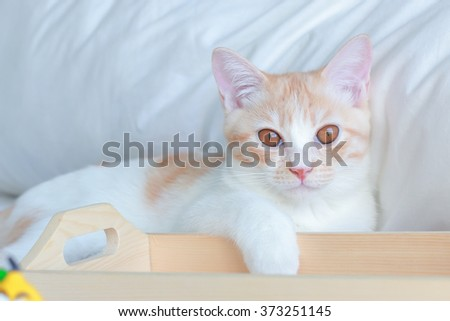 little ginger cat relax on the white bed - stock photo