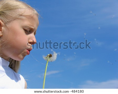 Little girl blows on dandelion on the blue-sky background