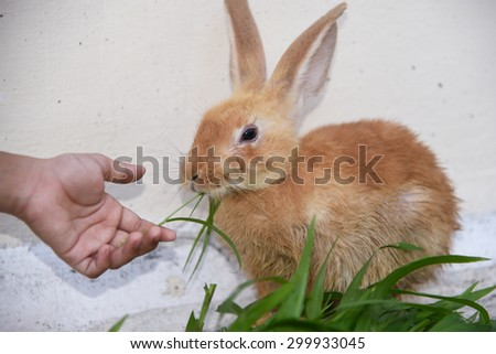 Little girl caring and feeding her loving pet food with hand, watching. Rabbit is eating rabbit feed and grass. - stock photo