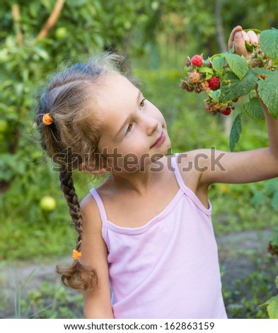 Little girl collects raspberries. Girl eats raspberries from the bush. - stock photo