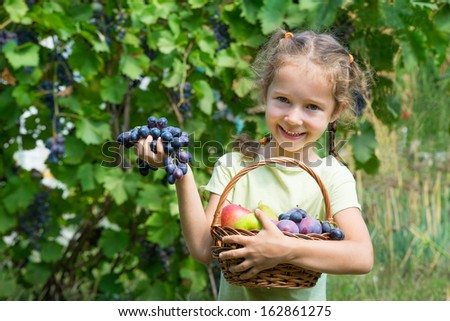Little girl harvesting grapes - stock photo