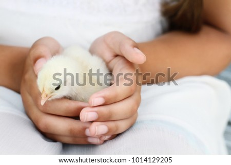 Little girl holds a white Brahma chick that is just days old.