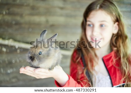 Little girl holds shaggy gray rabbit in hands, focus on rabbit.