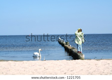 Little girl on a beach looking at swimming swan