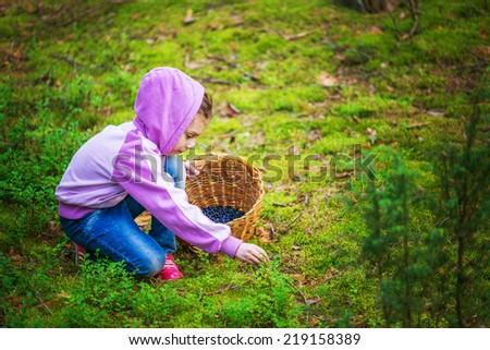 Little girl pick blueberries in summer dense forest. - stock photo