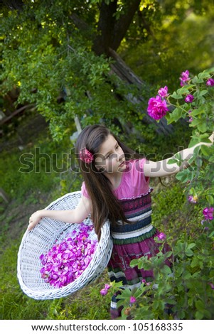 Little girl picking  roses for perfumes and rose oil in the garden - stock photo