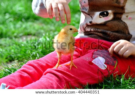 Little girl pointing a small chicken sitting on her leg - stock photo